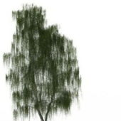 Garden White Willow Tree