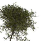 Nature Wild Service Tree