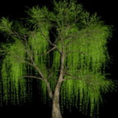 Garden Willow Tree