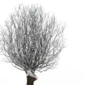 Winter White Tree Scene