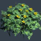 Garden Yellow Flower Bush