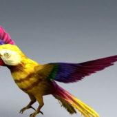 Yellow Parrot Animal