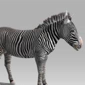 Wild Zebra Rigged Animated