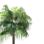 Zombia Antillarum Palm Tree